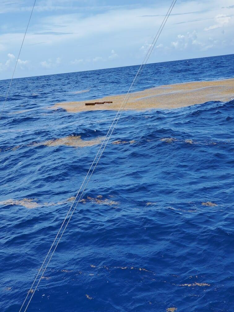 Mahi Fishing FLoater