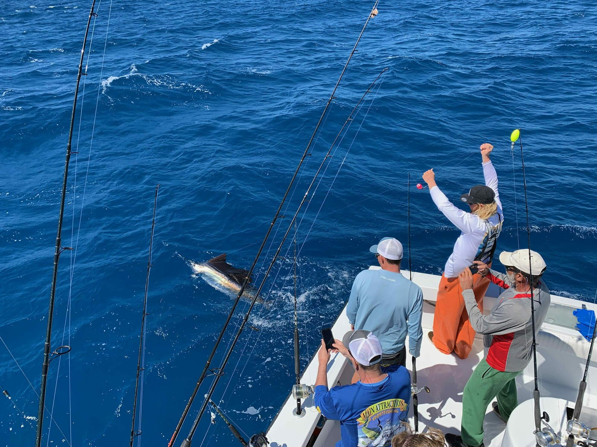 Kite Fishing Sailfish