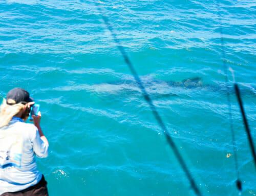 Shark Fishing in the Florida Keys