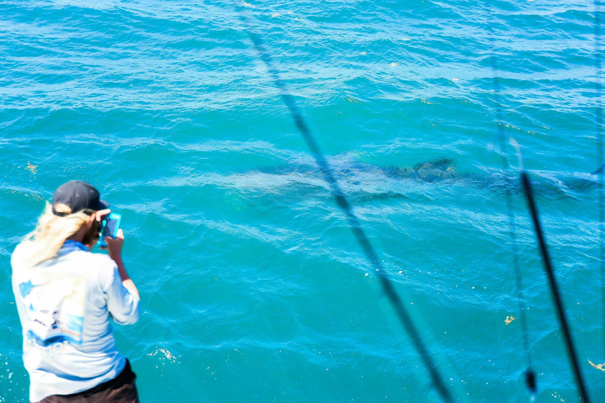 Florida Keys Whale Shark
