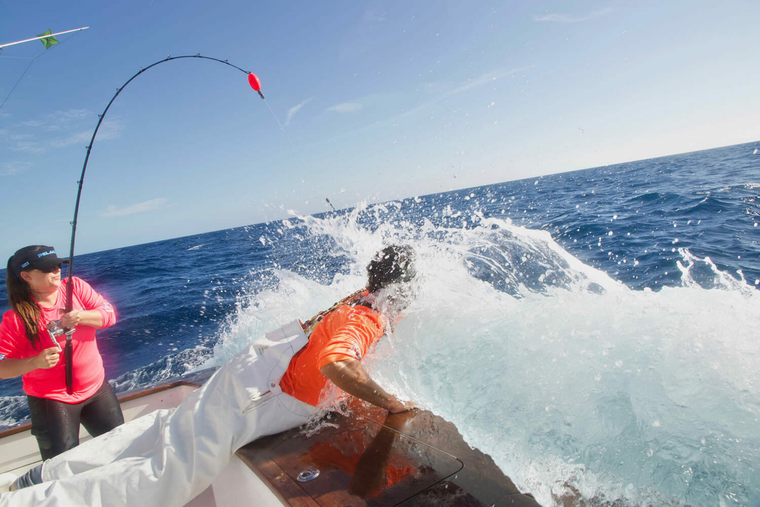 Backing Down on Sailfish