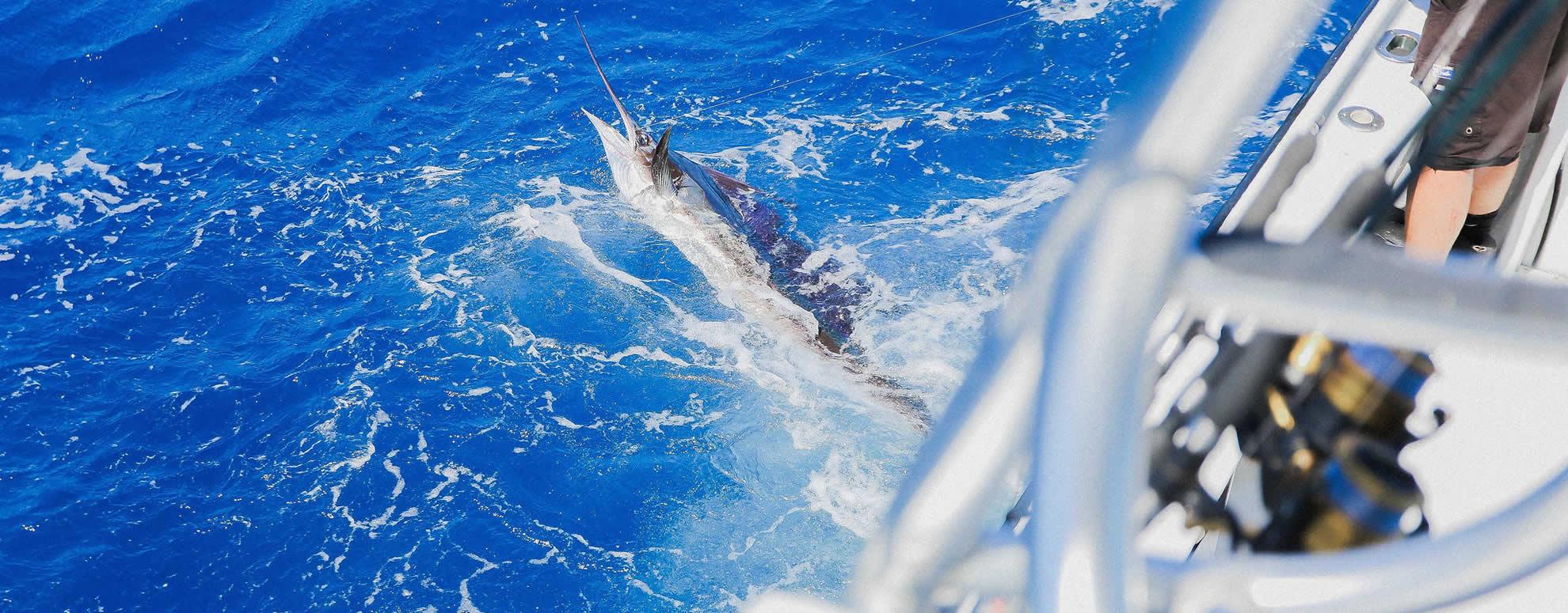 Sailfish Caught Offshore