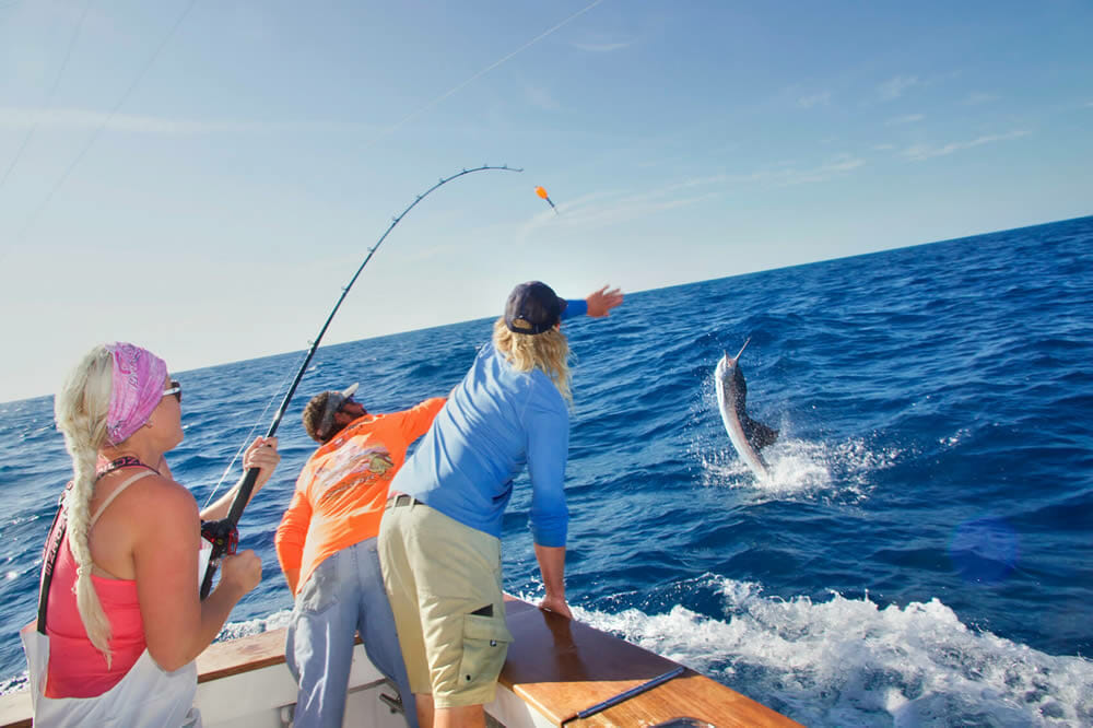 Florida Keys Sailfish Release