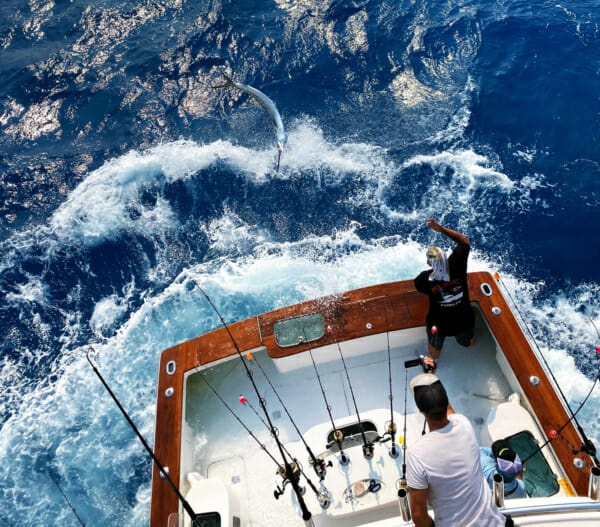 Florida Keys Sailfish Record