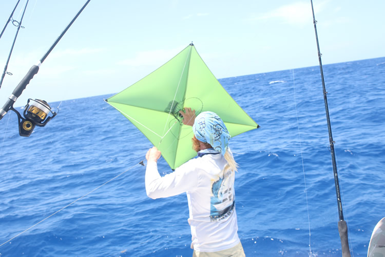 Sailfish Kite Fishing