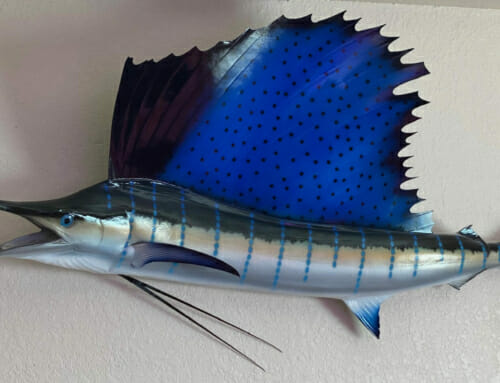 Florida Keys Fish Mounts and Taxidermy