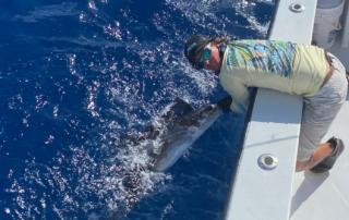 Florida Keys Sailfish
