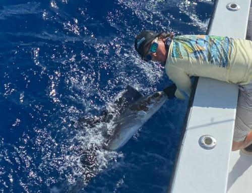 Sailfish On The Reef! – Florida Keys Kite Fishing